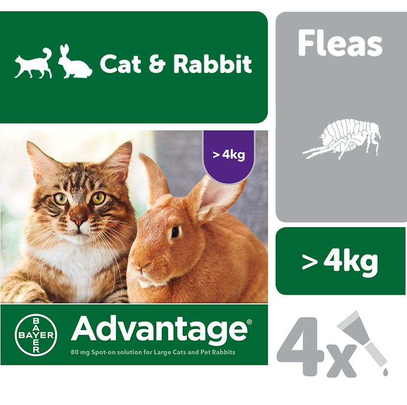 Advantage flea drop cats and rabbit