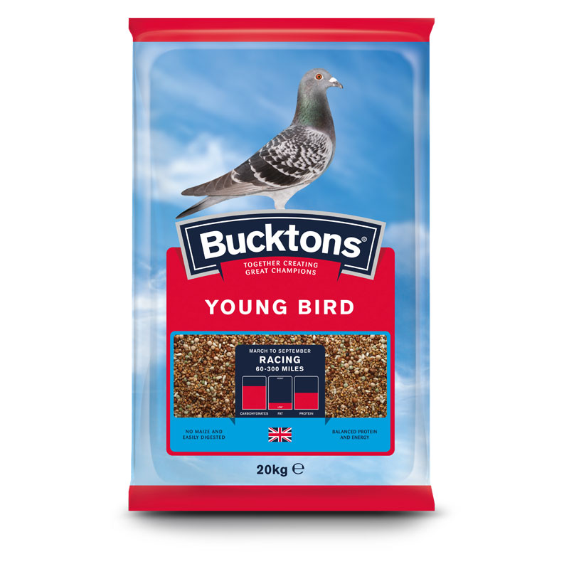 Buckton Pigeon Young Bird food