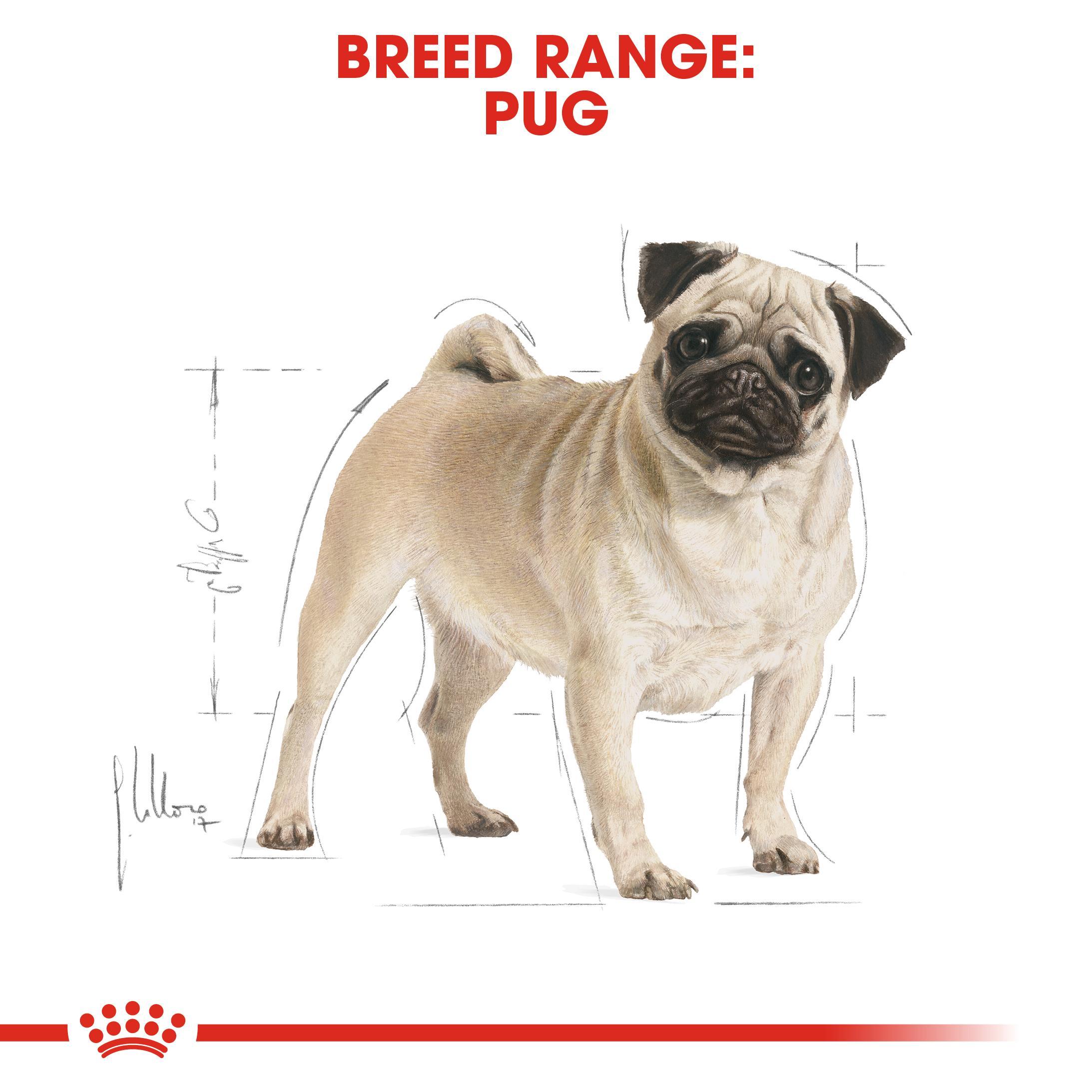 Royal Canin Pug Dry Adult Dog Food 7 5kg Buy Royal